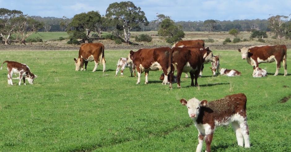 Koallah Farm